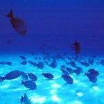 Los parques marinos de Kenia