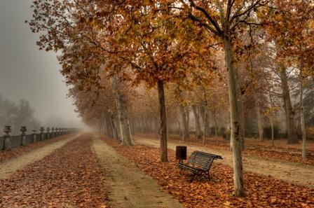Paseo arbolado luciendo los colores propios del otoño.