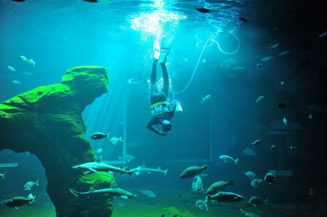 CANTABRIA DOS. Nadando con tiburones