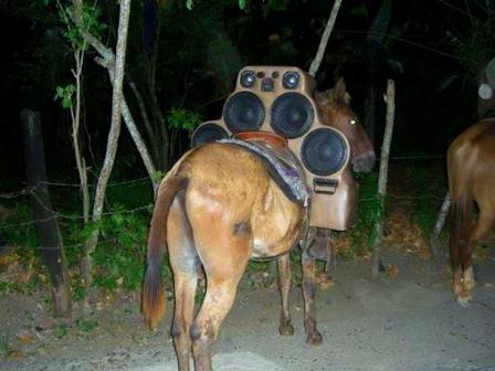Disco-mulo