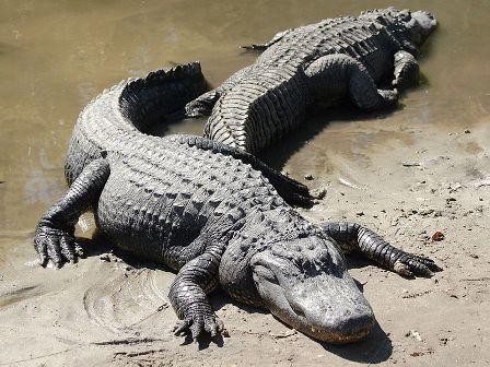 Everglades, el inquietante mundo de los pantanos