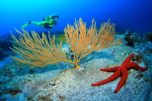 La Playa de Las Canteras  centro del mundo de la fotografía submarina