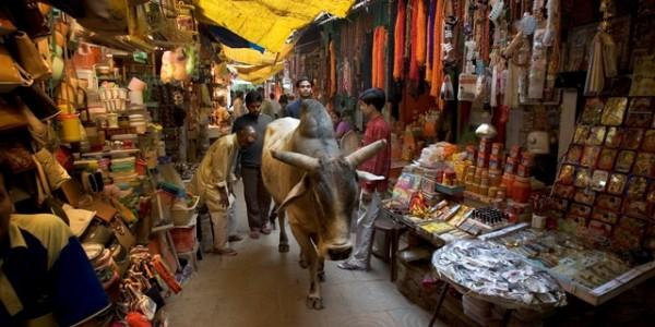 Una vaca sagrada se pasea por el mercado ante la mirada respetuosa de los comerciantes y viandantes.
