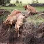 Kenya: Una tierna historia de amor animal