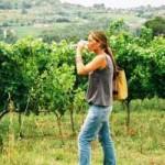 Valladolid: La Ruta del Vino de Rueda