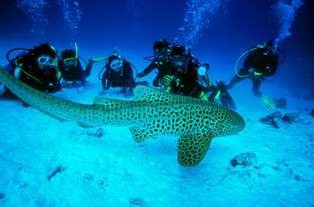 Buceando en el mar de Andamán.