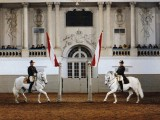 Escuela Española de Equitación de Viena (FotoWienTourismus / Spanische Hofreitschule / Herbert Graf)